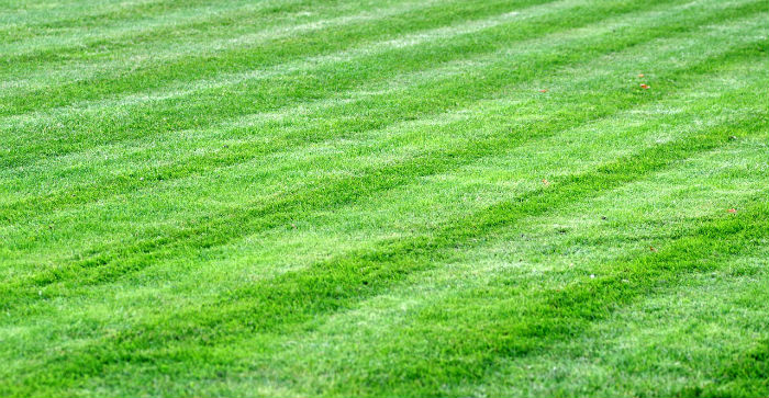 Get A Green Lawn