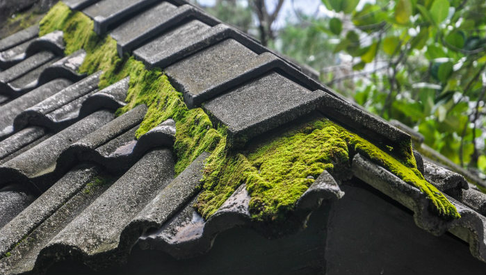 Moss Causing Roof Issues