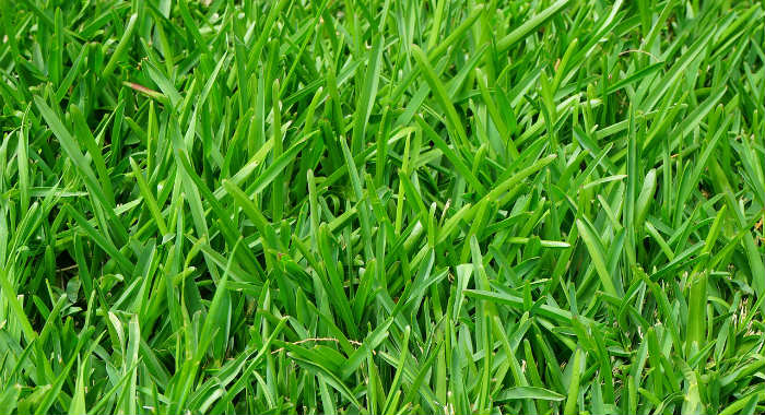 Types of garden turf