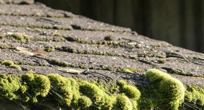 Yes, moss damages your roof