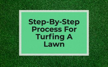 Process for turfing a lawn
