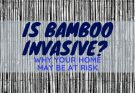 Is Bamboo Invasive? Why Your Home May Be At Risk