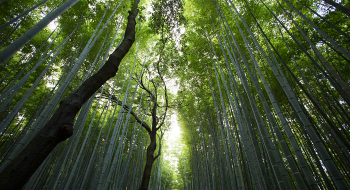 There is no such thing as non.invasive bamboo. All you can do is control its growth.