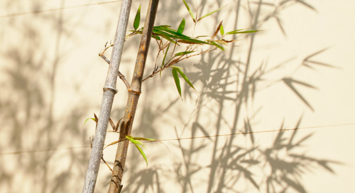 The only way to stop bamboo from spreading is to not plant it at all, or controlling its growth regularly by having them in containers.