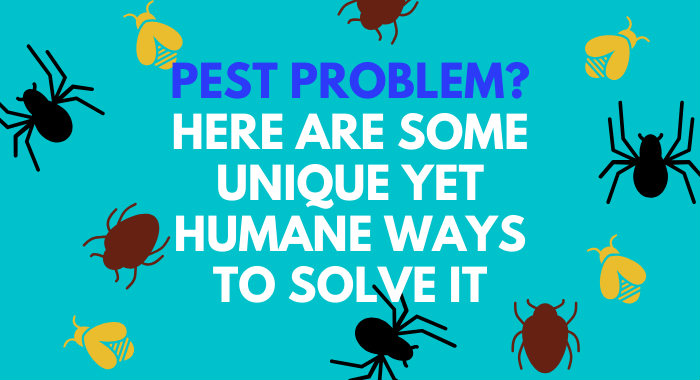 Pest Problem? Here Are Some Unique Yet Humane Ways To Solve It
