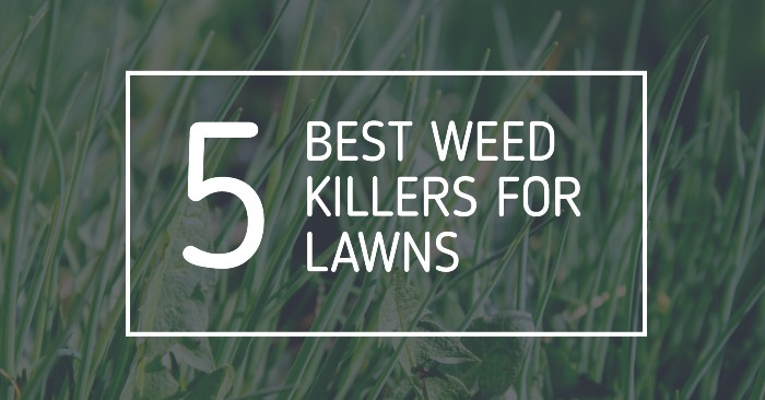 Best Weed Killers For Lawns UK