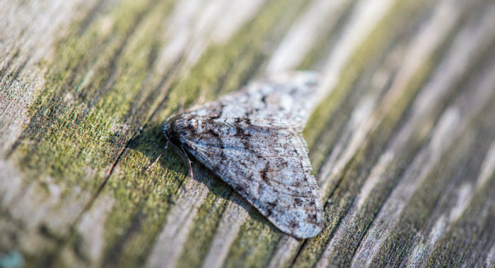 Ultrasonic sound waves can help keep moths away from your house.