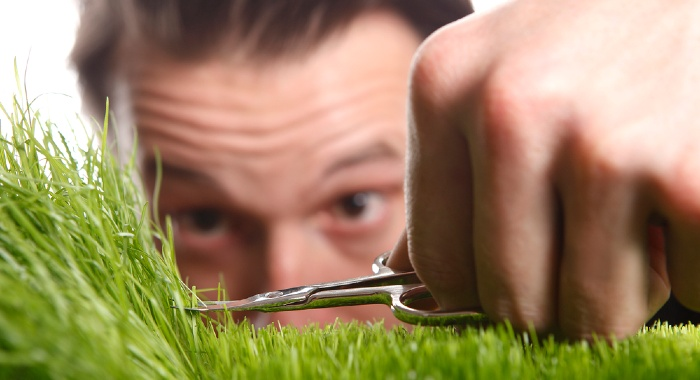 If you are using grass seeds, it is super important to give your lawn a timely trim.