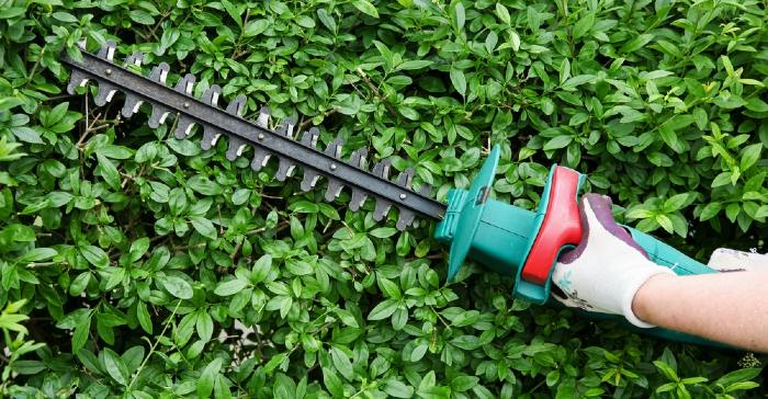 Petrol vs Electric Corded Vs Cordless Hedge Trimmer