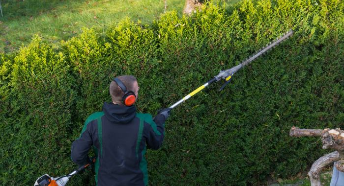 Best Long Reach Hedge Trimmers