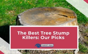 Best Tree Stump Killer