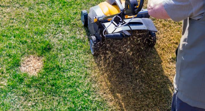 The scarification process is a mechanical one that will remove excessive thatch in an aggressive manner for the lawn to regrow stronger.
