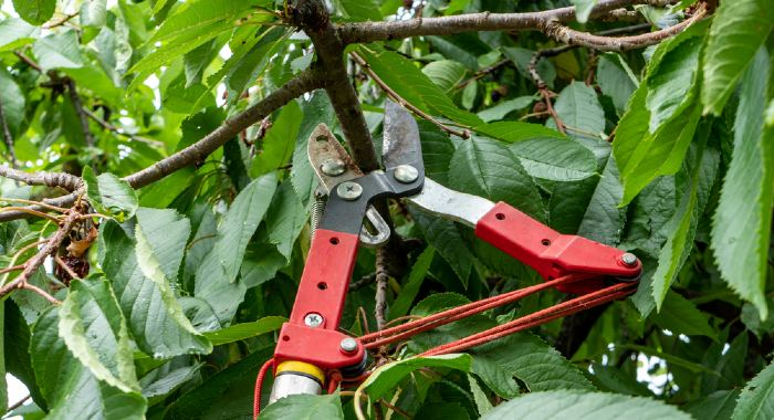 Garden Loppers UK