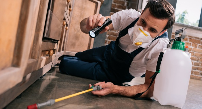 In some cases the tenant can be responsible for the pest control costs.